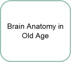 brain anatomy in old age